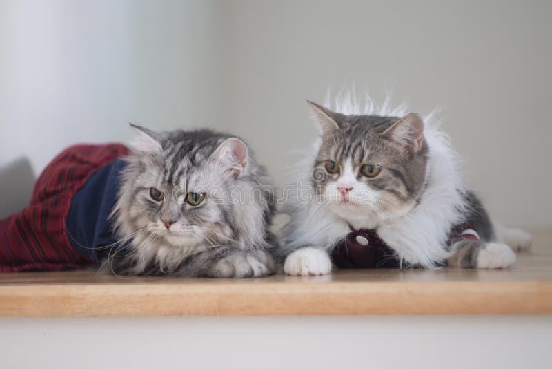 Kleiden Sie Ihre schönen Katzen stockfotos