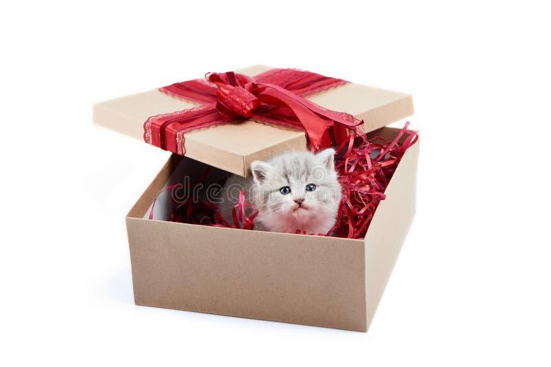 Klein aanbiddelijk grijs katje die uit verfraaide kartondoos kijken die verjaardagsgeschenk zijn stock afbeelding