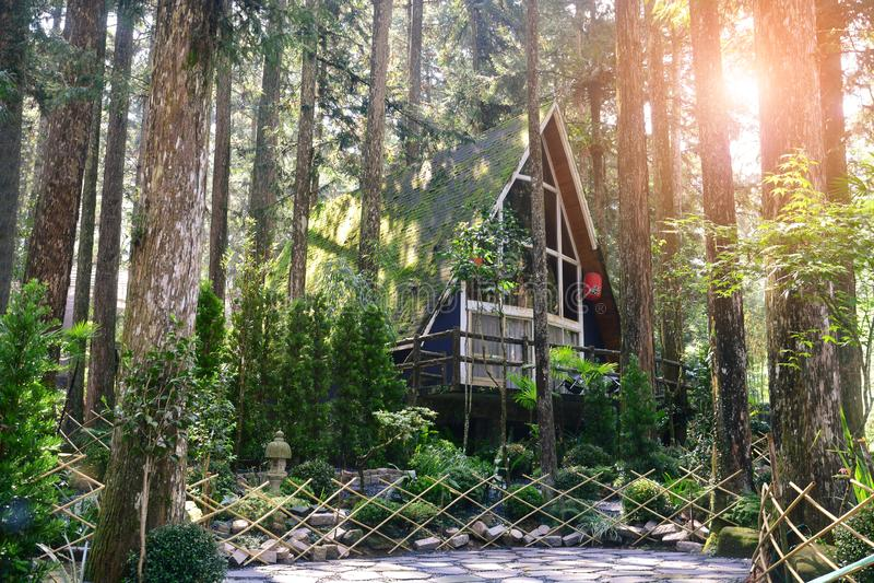 Klein blokhuis of plattelandshuisje in het pijnboombos met Japanse tuinstijl, zonsondergangachtergrond royalty-vrije stock foto's