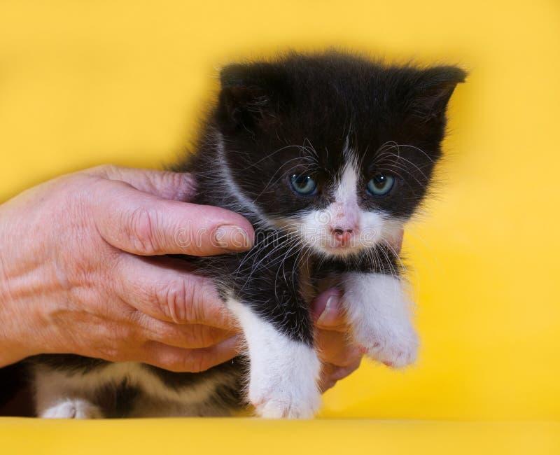 Klein boos zwart-wit katje ter beschikking op geel stock afbeelding