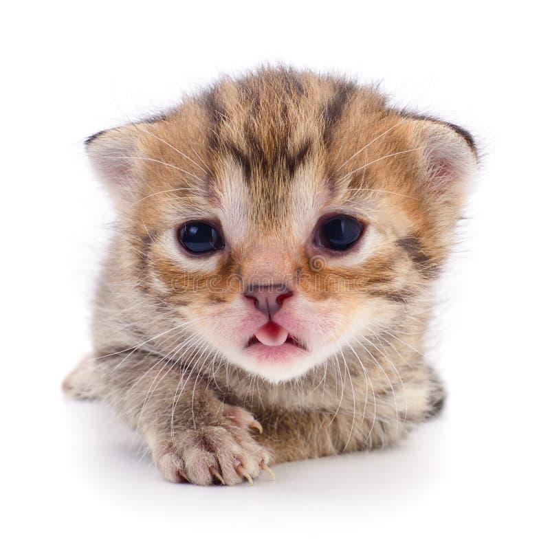 Klein bruin die katje op witte achtergrond wordt geïsoleerd royalty-vrije stock afbeelding