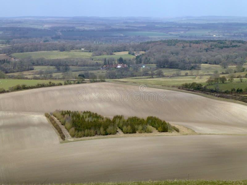 Klein die hout door krijtachtig gebied in West-Berkshire wordt omringd royalty-vrije stock fotografie