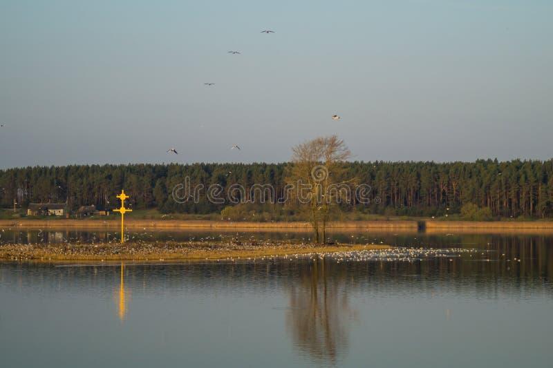 Klein eiland met het kruis en vele vogels royalty-vrije stock afbeeldingen