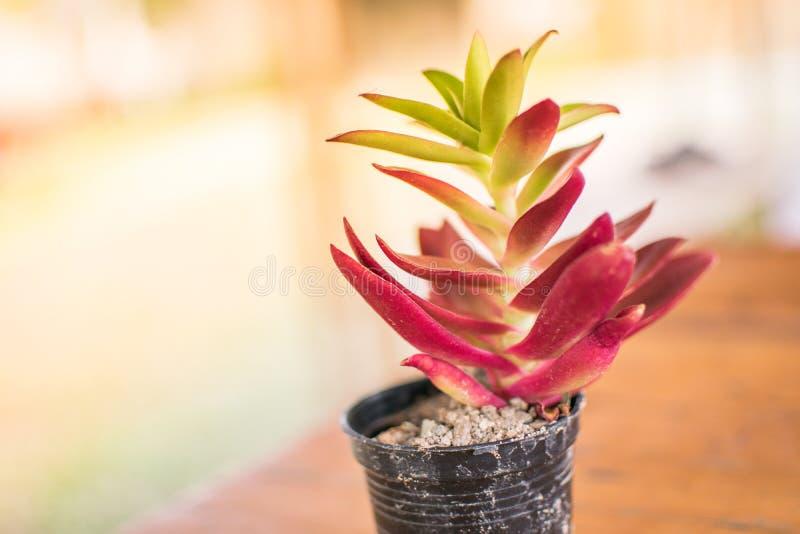 Klein en Lichtoranje bloemcactus stock foto
