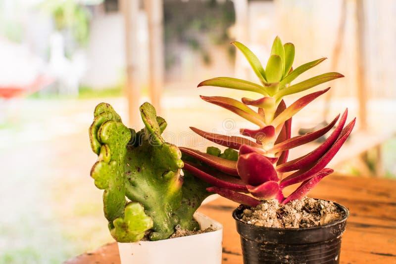 Klein en Lichtoranje bloemcactus royalty-vrije stock fotografie