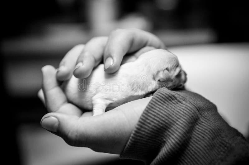 Klein en teder met de hand gehouden puppy stock afbeelding
