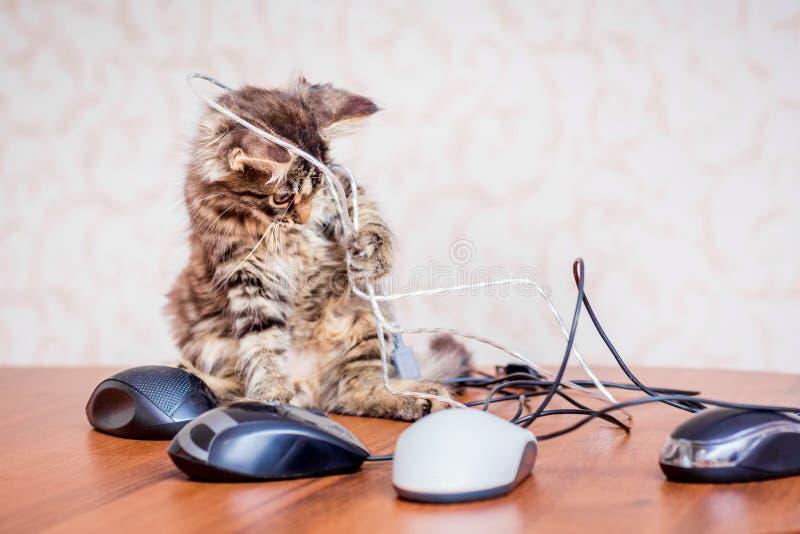 Klein gestreept katje dichtbij computermuizen  stock fotografie