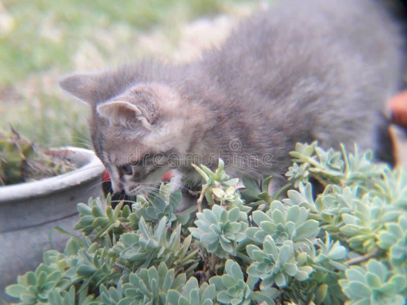 klein grijs katje die op installaties, bloemen en gras lopen royalty-vrije stock foto's