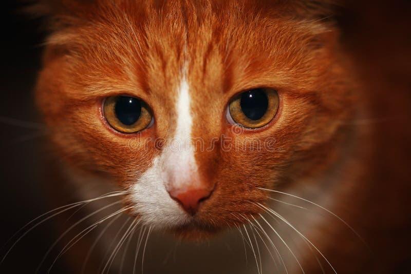 Klein grijs katje op haar overlapping royalty-vrije stock afbeelding