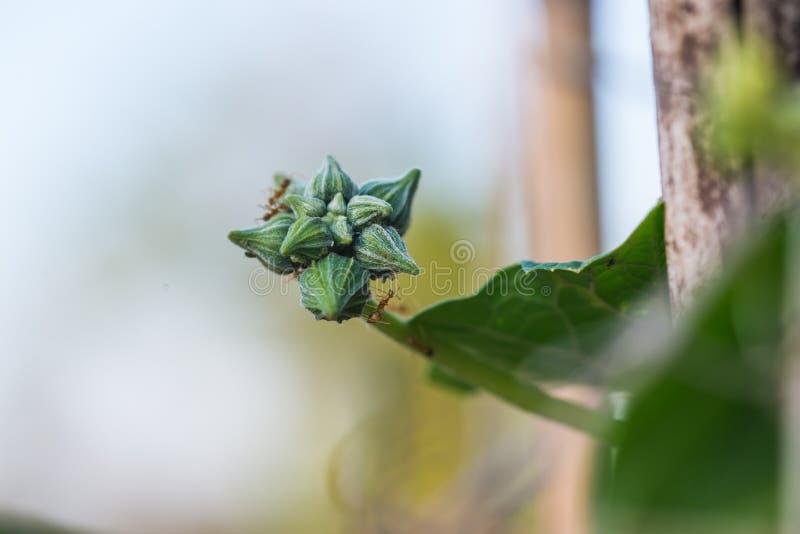Klein groen merg met bloem het groeien op het plantaardige bed royalty-vrije stock fotografie