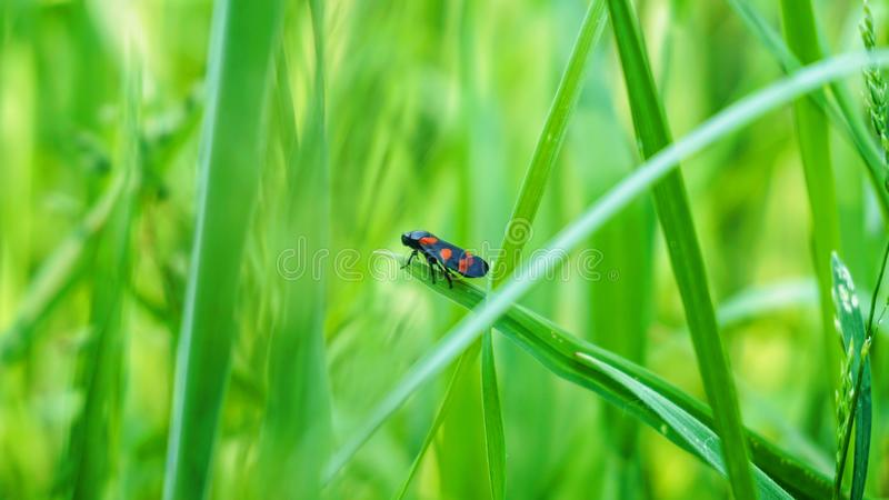 Klein insect die zich op het blad bevinden royalty-vrije stock afbeeldingen