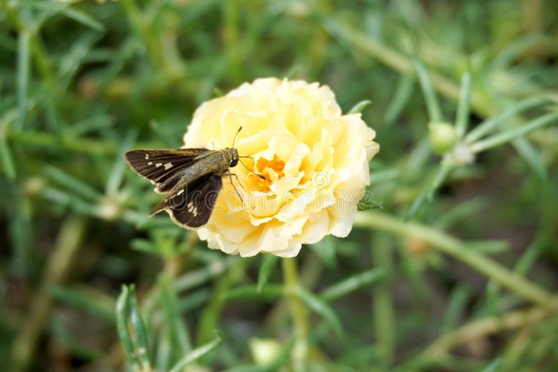 Klein insect op gele bloem stock fotografie