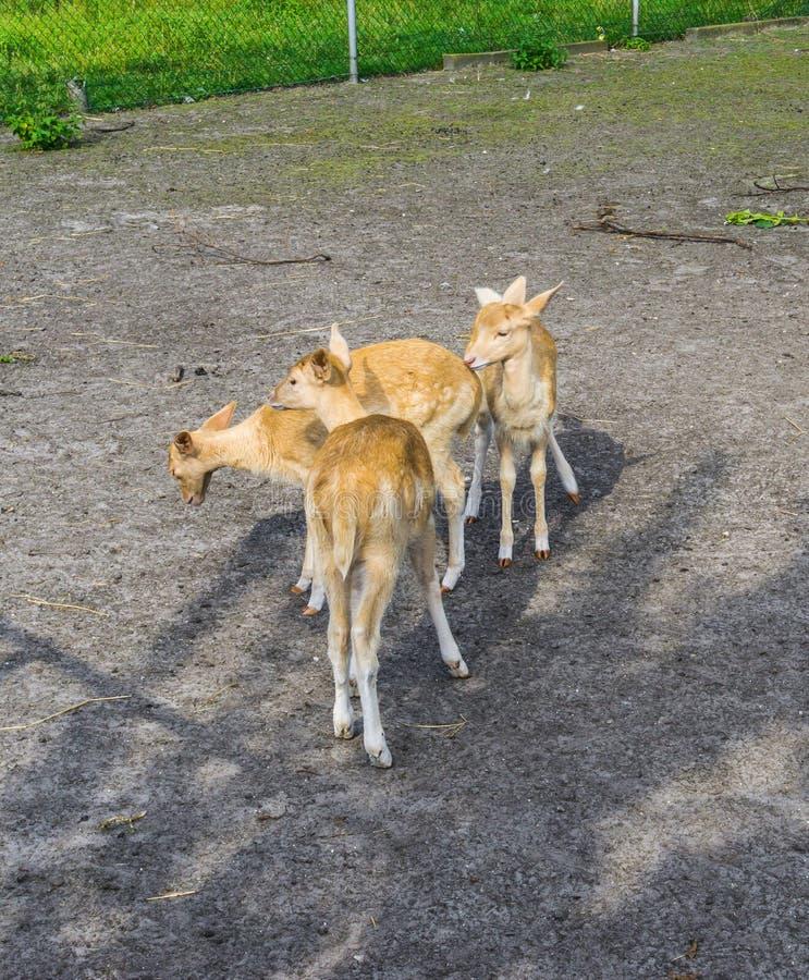 Klein jong de dierenlandbouwbedrijf van de deersgroep stock foto