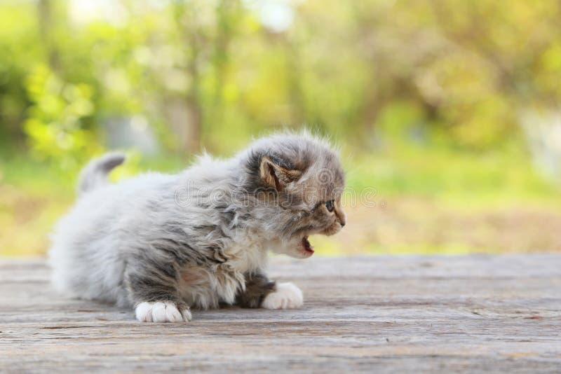 Klein katje stock afbeelding
