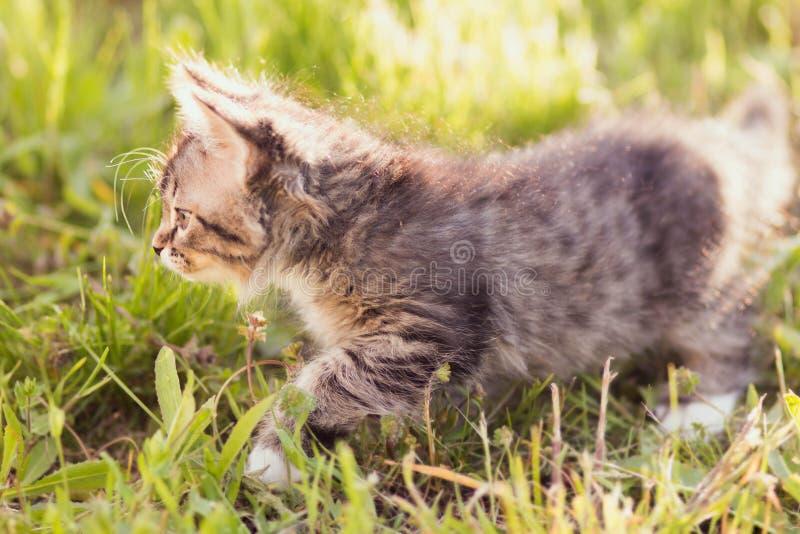 Klein katje die in gras lopen stock fotografie
