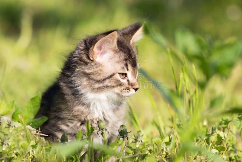 Klein katje die in gras lopen stock afbeeldingen