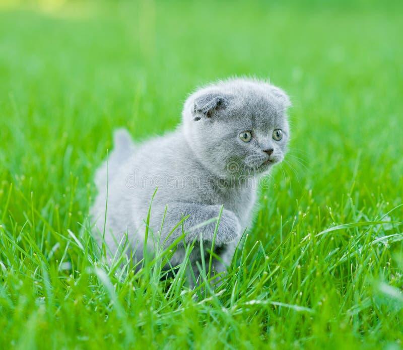 Klein katje die op groen gras lopen royalty-vrije stock afbeelding