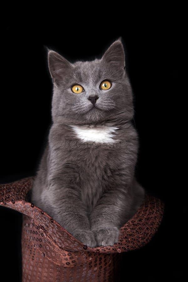 Klein katje in een GLB stock fotografie