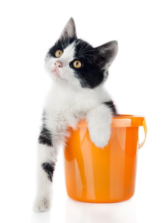 Klein katje in emmer die op wit wordt geïsoleerds royalty-vrije stock fotografie