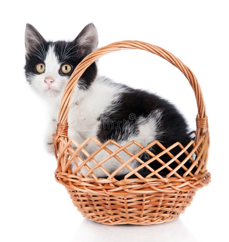 Klein katje in geïsoleerdet mand royalty-vrije stock foto