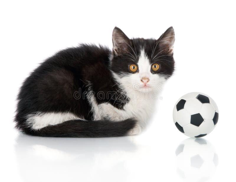 Klein katje met voetbalbal royalty-vrije stock afbeeldingen