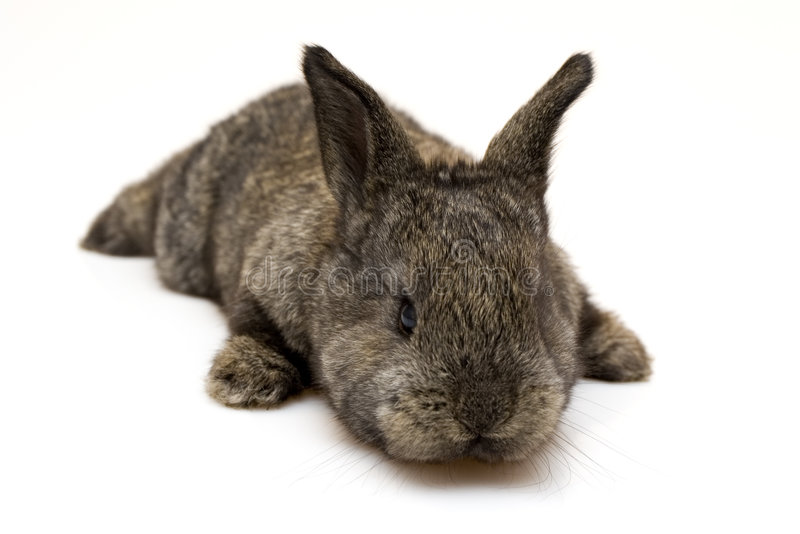 Klein konijn royalty-vrije stock foto's