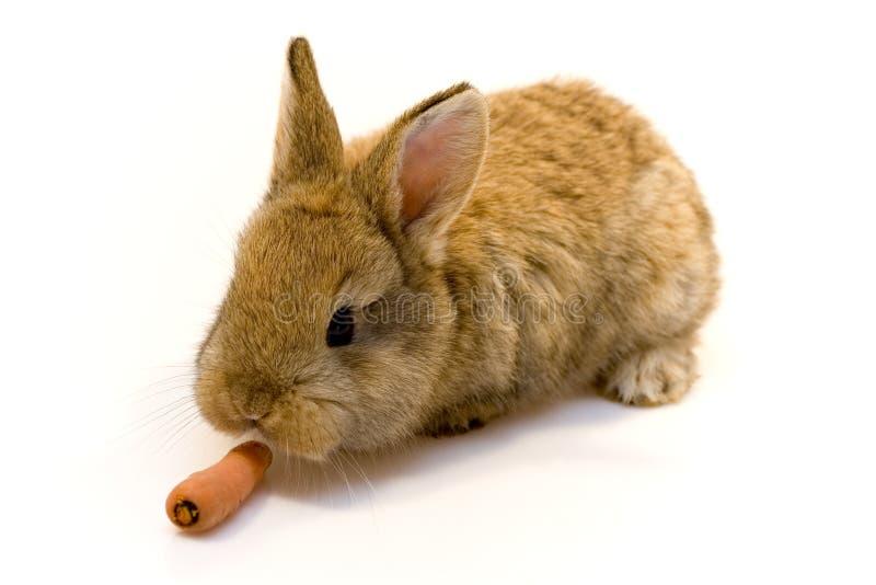 Klein konijn royalty-vrije stock foto