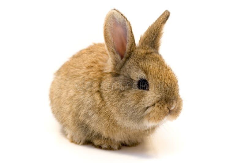 Klein konijn royalty-vrije stock fotografie