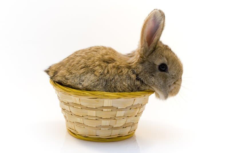 Klein konijn stock foto's