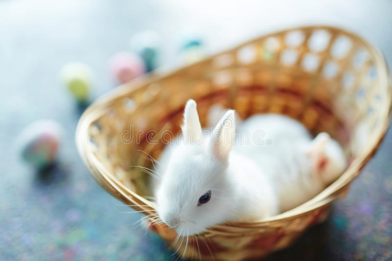 Klein konijntje stock afbeelding