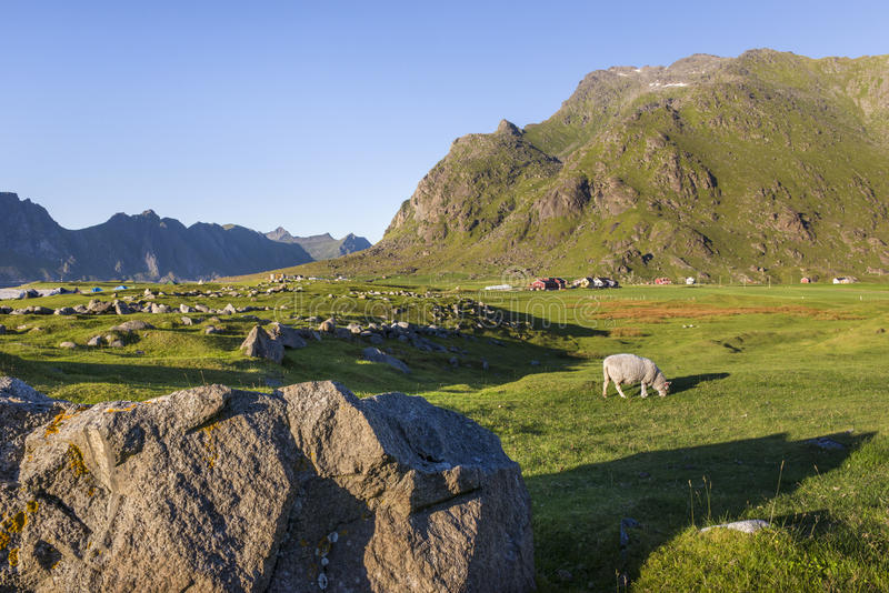Klein landbouwbedrijf op Lofoten-Eilanden, Noorwegen stock foto
