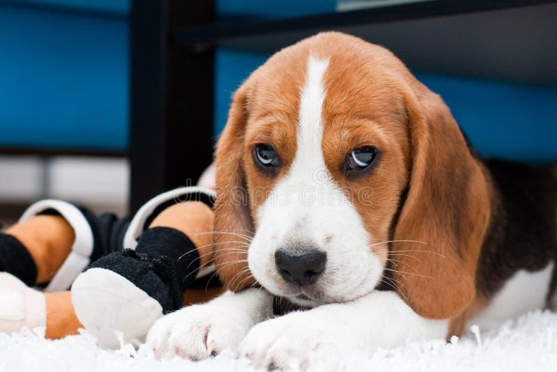 Klein leuk puppy met speelgoed royalty-vrije stock foto's