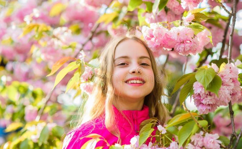 klein meisjeskind in de bloei van de de lentebloem Geniet van geur van tedere bloei Het concept van de Sakurabloem Schitterend bl royalty-vrije stock foto's