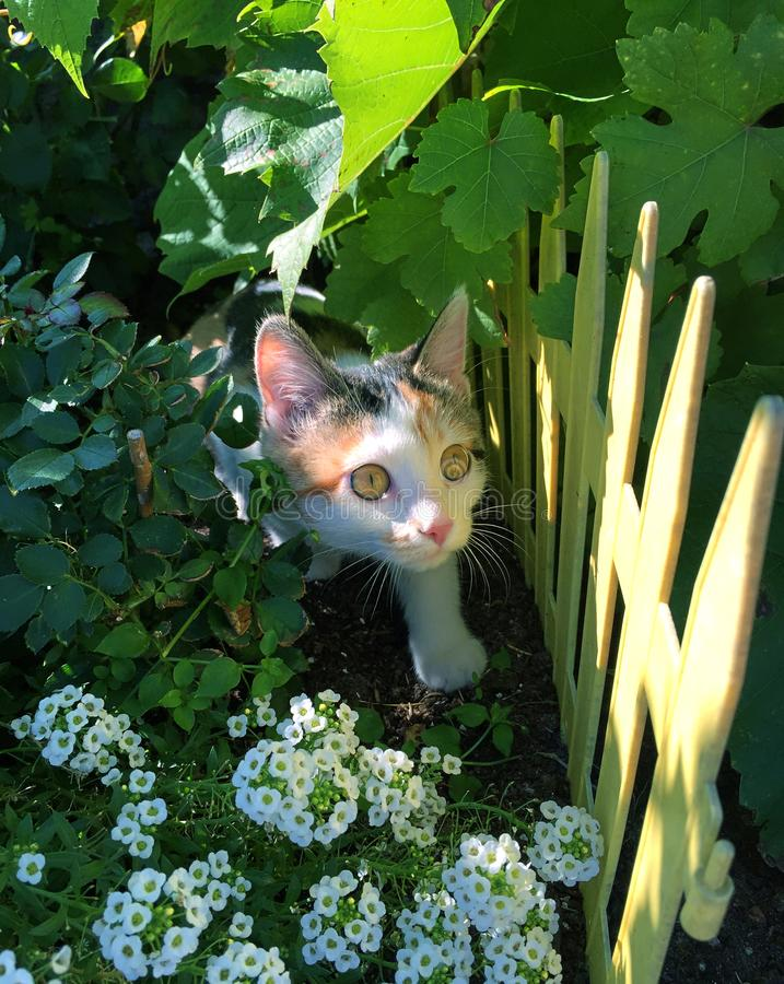 Klein multi gekleurd katje die merkwaardig van de struiken kijken stock fotografie