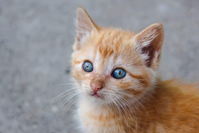 Klein oranje gestreepte katkatje met het fascineren kleurrijke ogen die afgelopen camera kijken royalty-vrije stock afbeelding