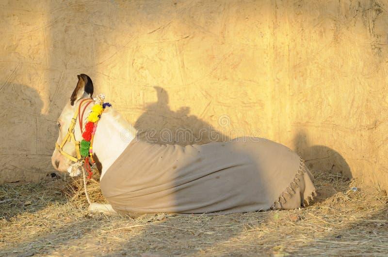 Klein Paard royalty-vrije stock foto