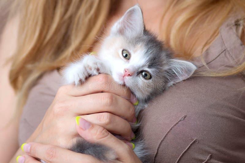 klein pluizig katje in de handen van vrouwen royalty-vrije stock afbeeldingen