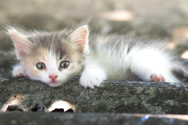 Klein pluizig katje die op aard lopen royalty-vrije stock foto's