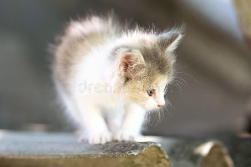 Klein pluizig katje die op aard lopen stock foto