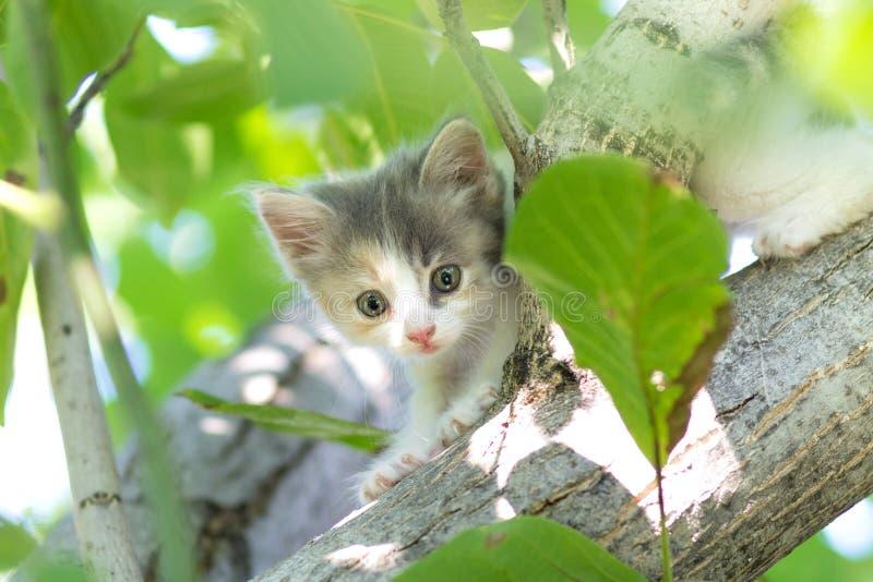 Klein pluizig katje die op aard lopen stock afbeelding