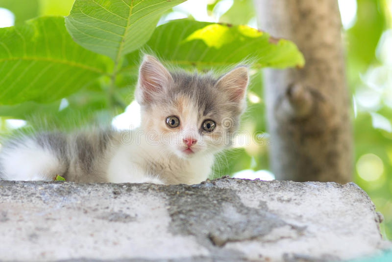 Klein pluizig katje die op aard lopen royalty-vrije stock foto