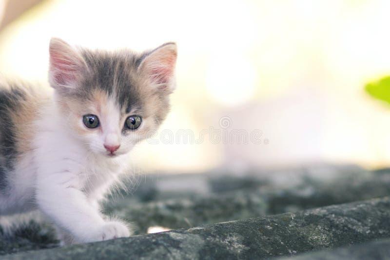 Klein pluizig katje die op aard lopen royalty-vrije stock fotografie