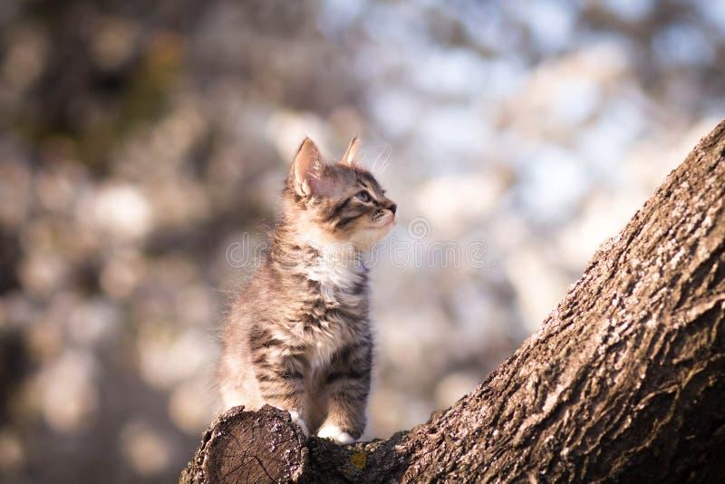 Klein pluizig katje op een boom stock foto's
