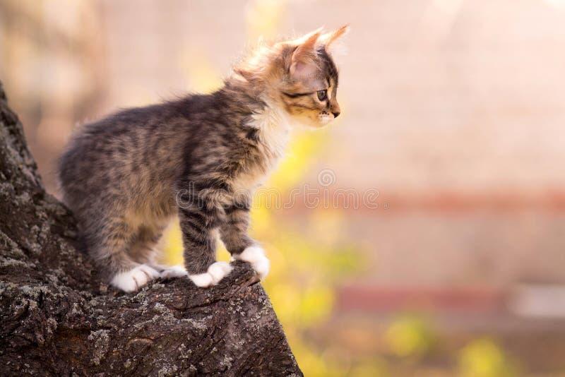 Klein pluizig katje op een boom stock foto
