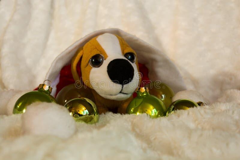 Klein puppy stock afbeelding