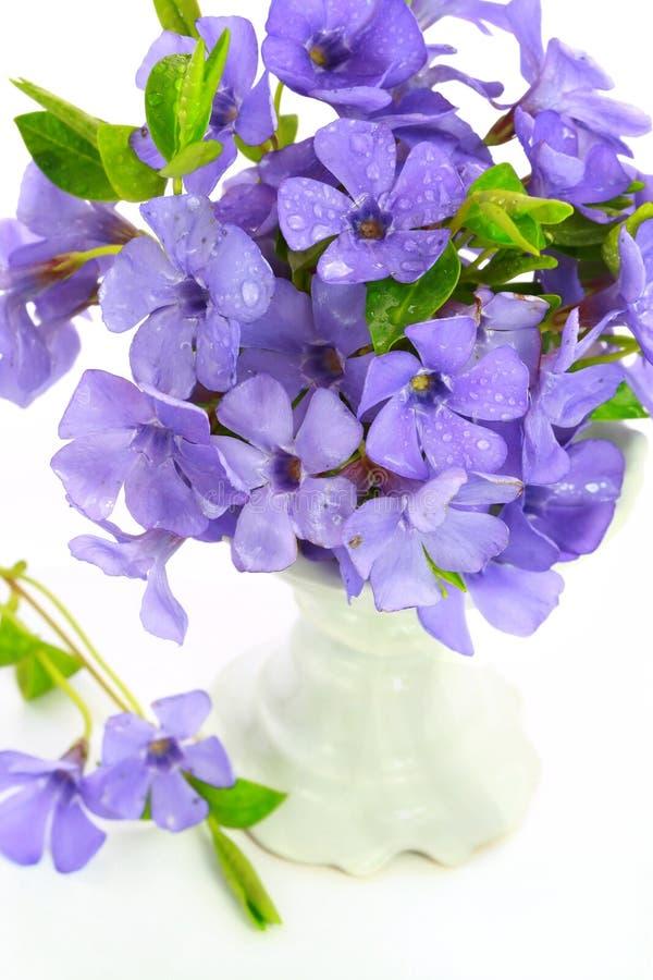 Klein viooltje van bloem stock foto's
