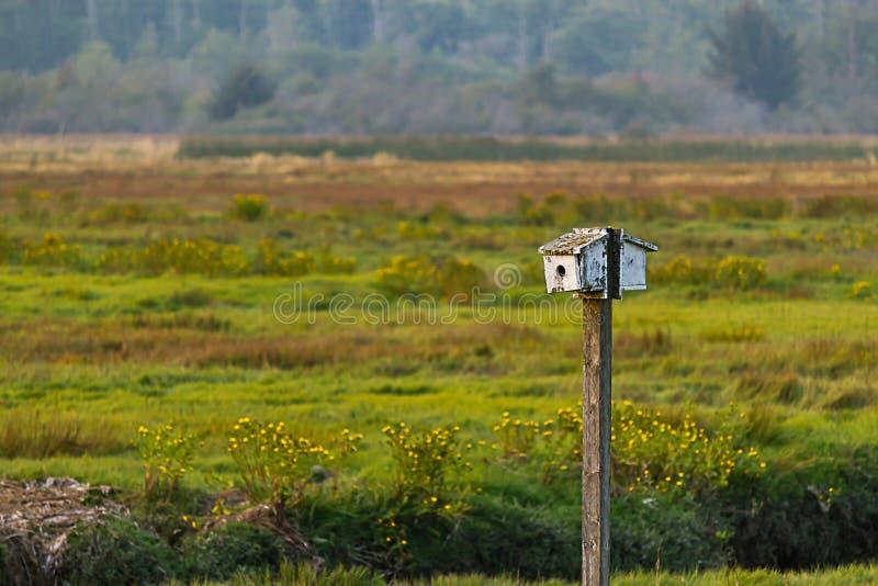 Klein wit vogelhuis op een pool op kleurrijk de recente zomergebied royalty-vrije stock afbeeldingen