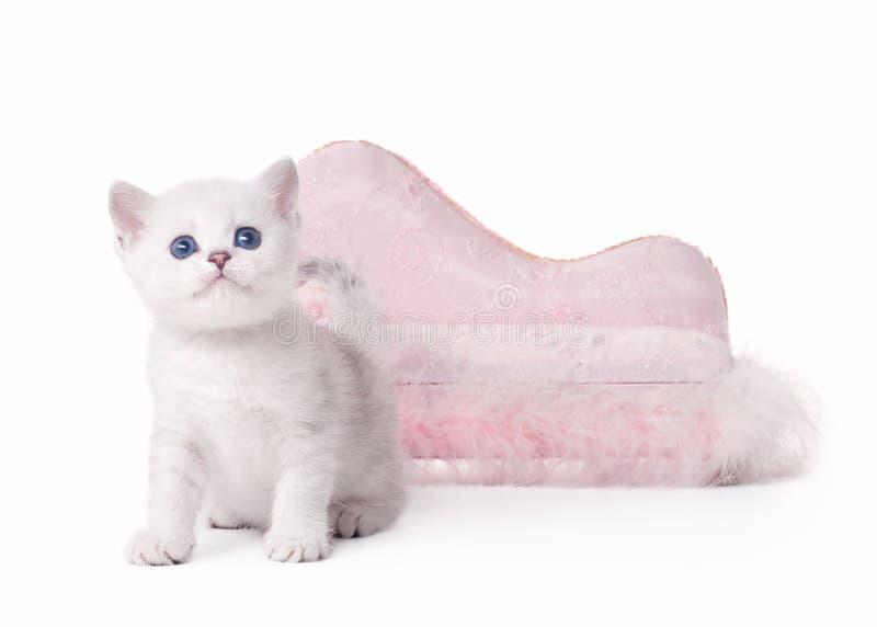 Klein zilveren Brits katje met roze divan stock fotografie