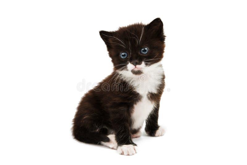 Klein zwart-wit katje stock afbeeldingen