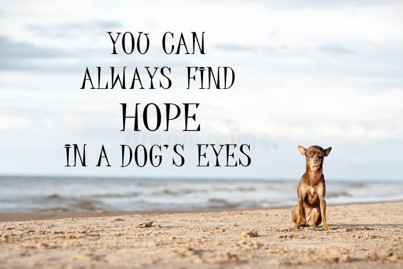Kleine abandonet eenzame hond op het strand Motieven citaat-knoei stock afbeelding